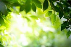 Natuurlijke groene achtergrond met selectieve nadruk royalty-vrije stock afbeelding