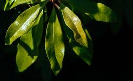 Natuurlijke groene bladeren op een installatie stock afbeeldingen