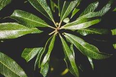 Natuurlijke groene bladeren op een installatie royalty-vrije stock foto's