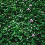 Natuurlijke groene bladerenachtergrond met uitstekende filter royalty-vrije stock foto