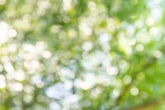 Natuurlijke groene bokeh abstracte achtergrond royalty-vrije stock afbeelding