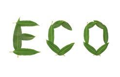 Natuurlijke groene die installatiebladeren in eco van het vormwoord op een witte achtergrond wordt geïsoleerd Stock Foto