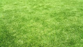 Natuurlijke groene textuur als achtergrond Stock Foto's