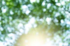 Natuurlijke groene vage achtergrond Royalty-vrije Stock Foto's