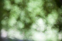 Natuurlijke groene vage achtergrond Stock Afbeelding