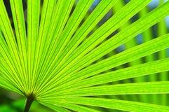 Natuurlijke Groene Ventilator Stock Afbeeldingen