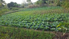 Natuurlijke groentenplaats Royalty-vrije Stock Afbeelding