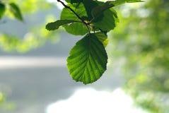 Natuurlijke heldere achtergrond stock fotografie