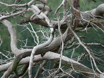 Natuurlijke houten abstractie Stock Fotografie