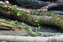 Natuurlijke houten textuur royalty-vrije stock afbeeldingen