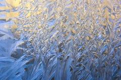 Natuurlijke ijzige patronen Stock Foto