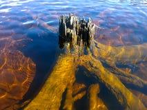 Natuurlijke ikebana Boom in water stock afbeelding