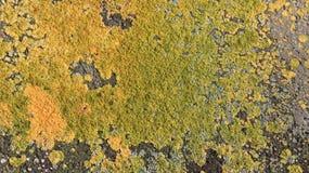Natuurlijke Kleurrijke Bemost op Cementmuren royalty-vrije stock afbeelding