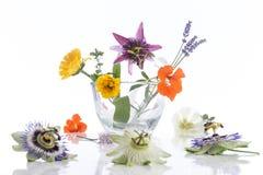 Natuurlijke kruid en bloemselectie voor kruidengeneeskunde stock afbeelding