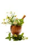 Natuurlijke kruiden. Stock Afbeelding