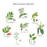 Natuurlijke kruideninzameling Stock Fotografie