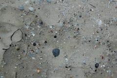 Natuurlijke kunst van de zeeschelpen op het zandige strand van de Noordzee in Zeeland in Nederland stock foto