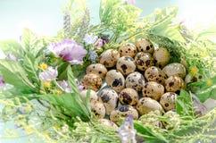 Natuurlijke kwartelseieren in bloemennest in zonnig licht op blauwe achtergrond Gelukkige Pasen, de lente, gezond het levensconce stock afbeelding