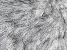 Natuurlijke lichtgrijze de textuurclose-up van het minkbont voor achtergrond stock afbeeldingen