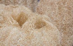 Natuurlijke luffa (loef spons) Stock Foto's