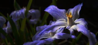 Natuurlijke magische bloem Stock Foto's