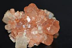 Natuurlijke mijnbloem Stock Foto's
