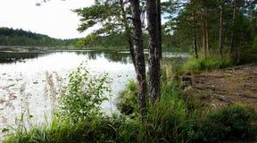 Natuurlijke moerasmening in de zomer royalty-vrije stock afbeeldingen