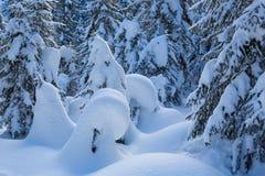Natuurlijke naaldbomen die door sneeuw in de winterlandschap worden behandeld stock afbeelding