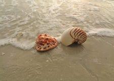 Natuurlijke Nautilus en Koning Helmet Conch Seashells op het strand die door de golf verpletteren stock fotografie