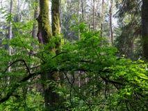 Natuurlijke oevertribune in het licht van de de lentezonsondergang Stock Afbeelding