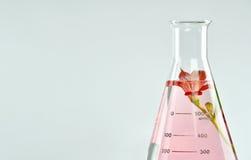 Natuurlijke organische extractie en groene kruidenbladeren, de essentieoplossing van het Bloemaroma royalty-vrije stock fotografie