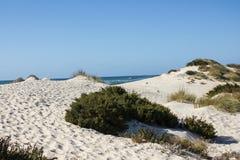 Natuurlijke, oude en beschermde zandduinen op de Atlantische westelijke kust van Portugal, Peniche, Baleal Royalty-vrije Stock Foto