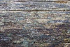 Natuurlijke oude okkernoot houten plak Stock Afbeelding