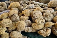 Natuurlijke overzeese spons Royalty-vrije Stock Foto