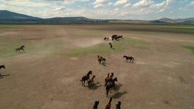 Natuurlijke paarden Wild paarden Kayseri in Turkije, het Concept Vrijheid, Sterkte, Ä°ndependence en Snelheid stock footage