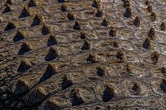 Natuurlijke Patronentexturen en Bezinningen over Krokodilhuid Stock Afbeeldingen