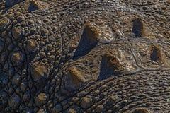 Natuurlijke Patronentexturen en Bezinningen over Krokodilhuid Royalty-vrije Stock Fotografie