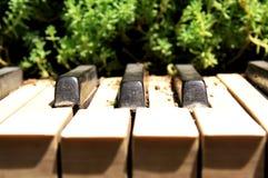 Natuurlijke piano stock foto