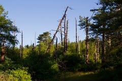 Natuurlijke regeneratie van een bos stock foto's
