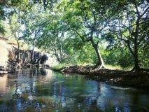 Natuurlijke rivier Stock Afbeeldingen