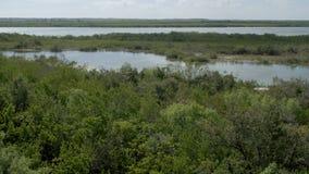 Natuurlijke rivier met weelderig groen bos stock footage
