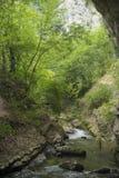 Natuurlijke rivierbomen Royalty-vrije Stock Foto