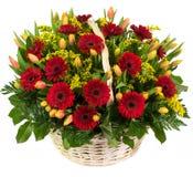 Natuurlijke rode gerberas en tulpen in een mand Stock Afbeeldingen