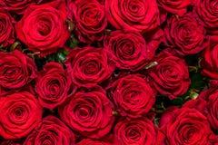 Natuurlijke rode rozenachtergrond stock foto
