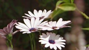 Natuurlijke rozen stock foto's
