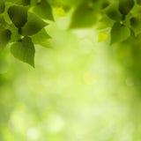 Natuurlijke Schoonheid. Stock Afbeeldingen