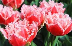 Natuurlijke Schoonheid Royalty-vrije Stock Afbeelding