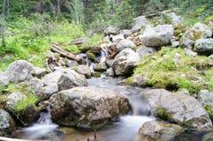 Natuurlijke Schoonheid Stock Foto's