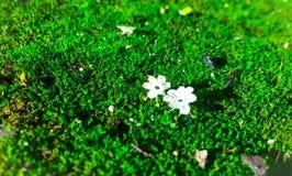 Natuurlijke Schoonheid Royalty-vrije Stock Foto