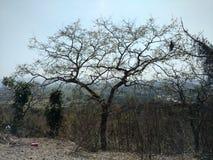 Natuurlijke schoonheid in bos Royalty-vrije Stock Afbeelding